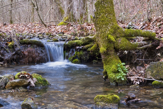Ouachita National Forest Waterfall