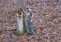 Hole In Tree In Ouachita National Forest