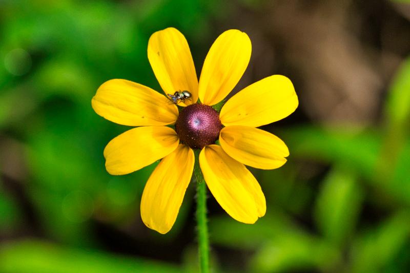 Wildflower With Spider
