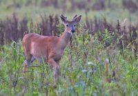 Whitetail Buck Walking Past Me