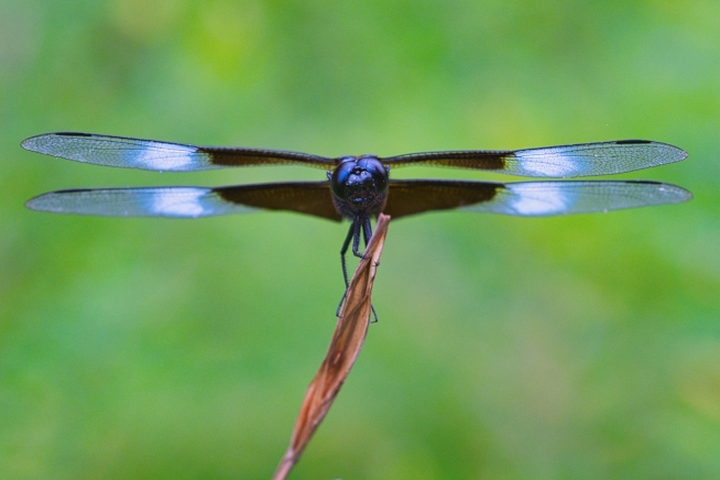 Eye to Eye With Dragonfly
