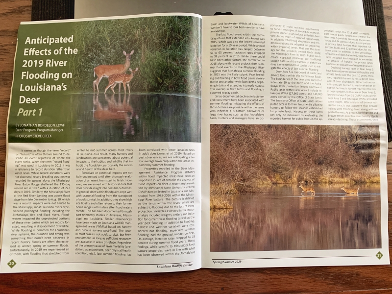 Louisiana Wildlife Insider Deer