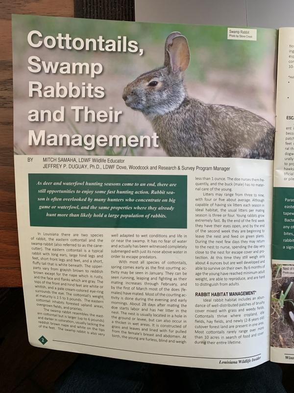 Louisiana Wildlife Insider Rabbit