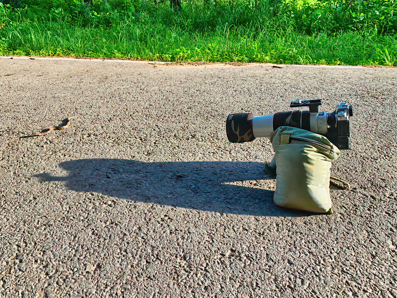 Photographing Water Moccasin