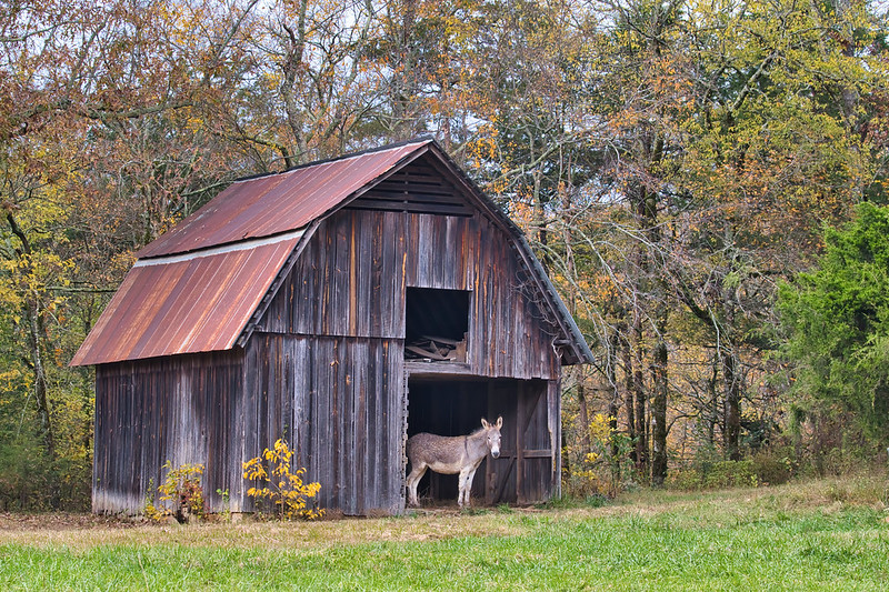 Barn and Donkey