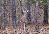 Deer Watching Bird