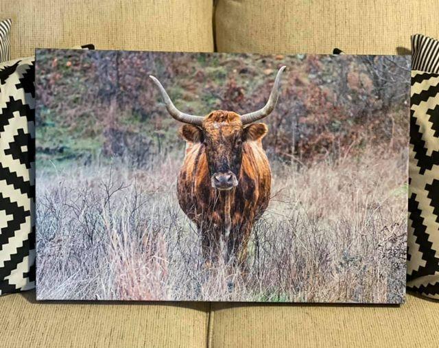 Texas Longhorn Canvas Print