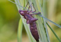 Dragonfly Exoskeleton